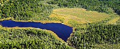 Caribou Plain