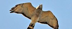 New Horton Hawk Watch Sit
