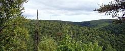 Prosser Ridge Lookout
