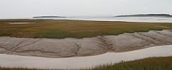 Shepody Marsh (Harvey to